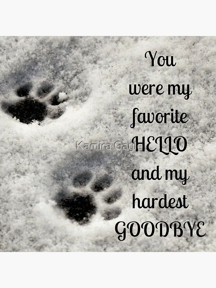 You Were My Favorite Hello And My Hardest Goodbye Poster By Kamira Gayle In 2020 Dog Heaven Quotes Pet Quotes Dog Pet Quotes Cat