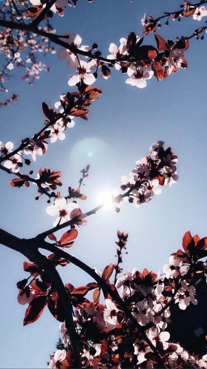 يقولون اشجار الياسمين لا تتعب احد في البحث عنها لان عطرها يدل عليها كذلك بعض البش Beautiful Flowers Wallpapers Aesthetic Iphone Wallpaper Photography Wallpaper