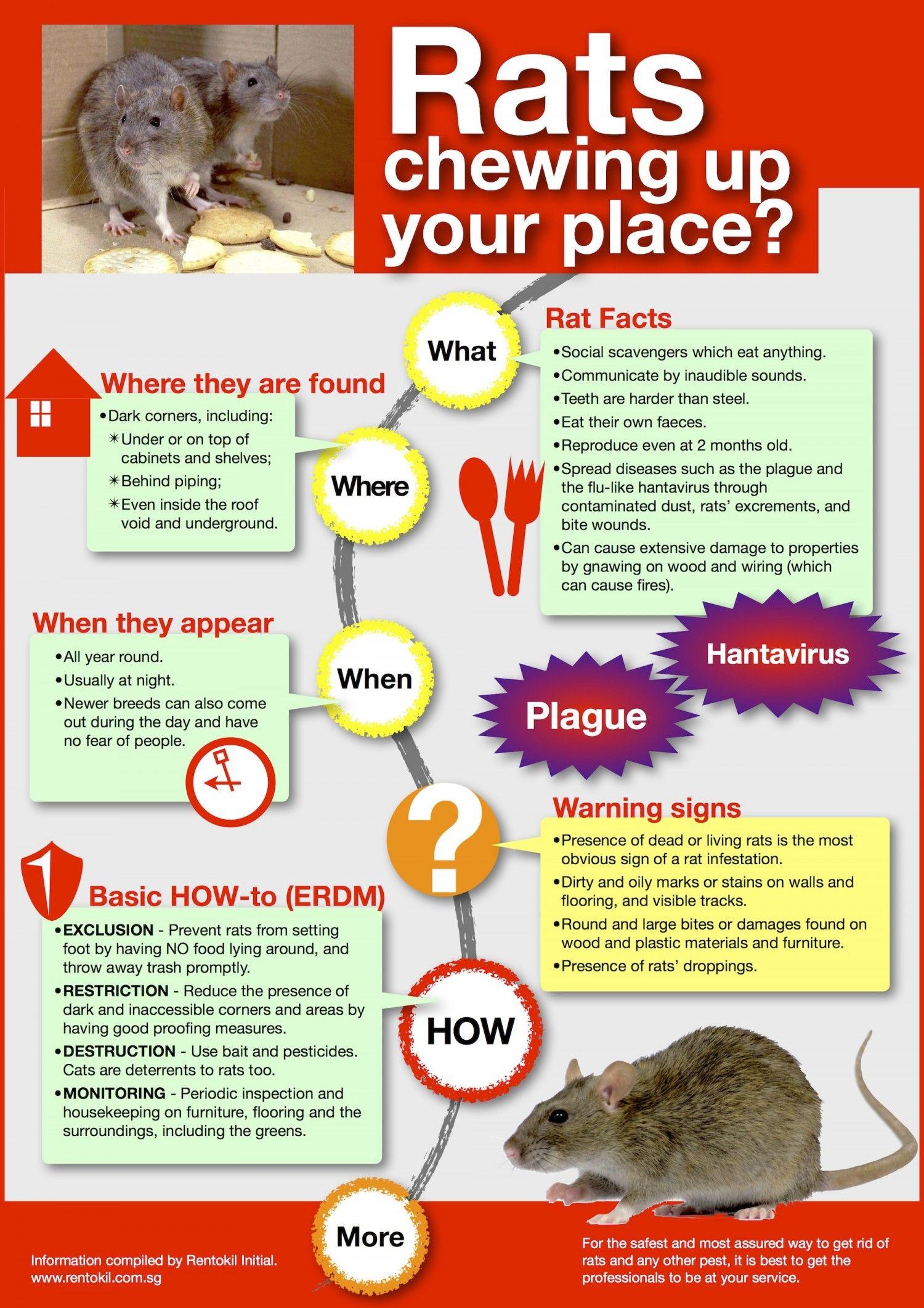 Rats Teeth Are Stronger Than Steel Dealing With Rodents Pests Circuits Online Artikelen Visual Basic En De Printerpoort