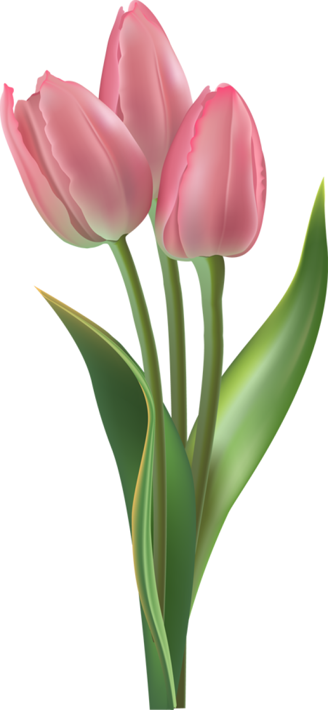 tulips in the spring - photo #38