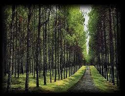 O caminho.