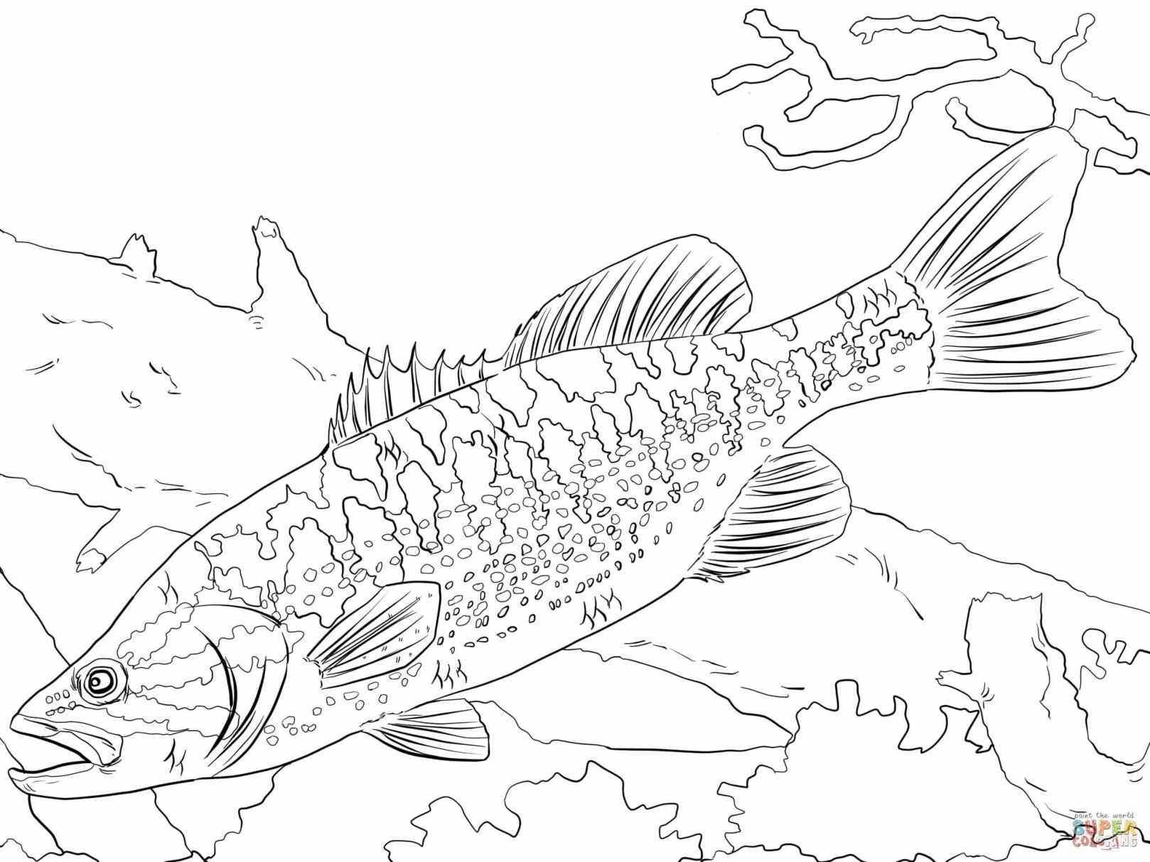 Pin By Jill Gunnstaks Bourne On Drawing Your Ideas Fish Coloring Page Shark Coloring Pages Easy Coloring Pages