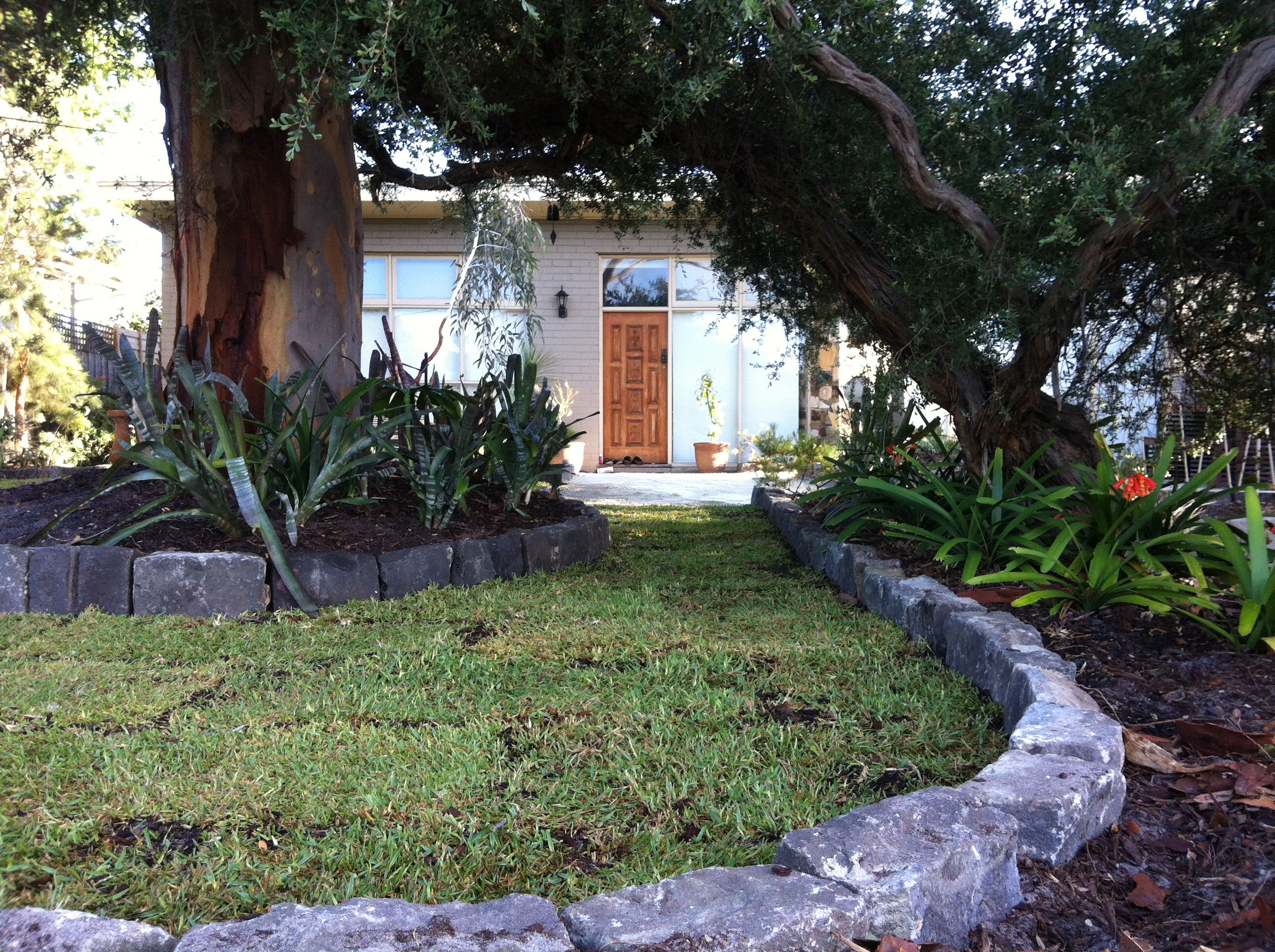 MCM Front Garden Renovation | New Lawn, Bluestone Edging And Feature  Planters Around Existing Leptopsermum