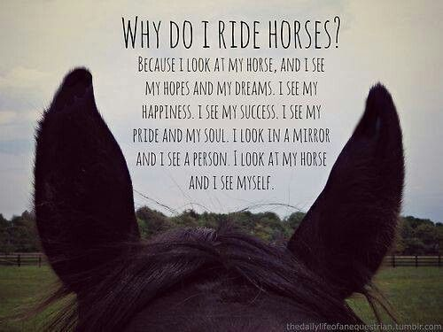 Horse Pictures With Quotes That a horse's disposition