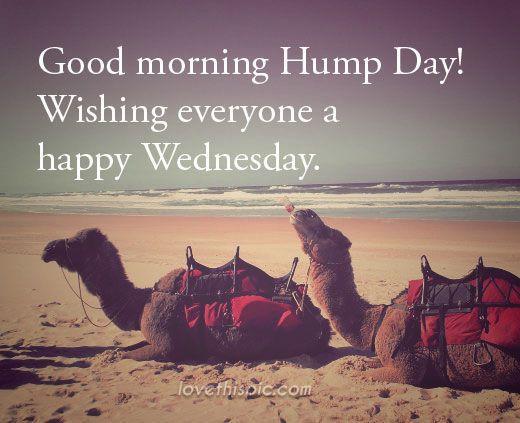 Good Morning Happy Hump Day Good Morning Wednesday Hump Day Humpday Wednesday Quotes Good Morning Quotes Happy W Good Morning Happy Wednesday Hump Day Hump Day