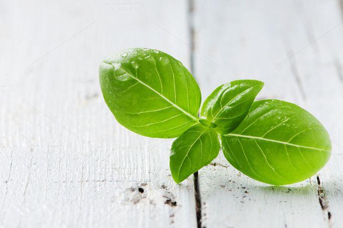 Green fresh basil by oxana.denezhkina on @creativemarket