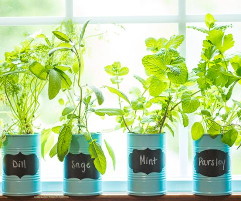 How To Make A DIY Indoor Window Sill Herb Garden   Save Money, Prevent Food