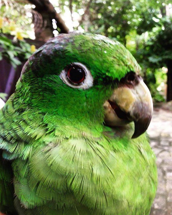 Papagaio moleiro no quintal #iphone #namaste #sustentabilidade #garden #jardim #nature #natureza #naturephotography #islandlife #brasil #brazil #brasilemfotos #verde #green #greenlife #instaphotography #bird #passarosdobrasil by irenemichalichen http://ift.tt/1Nz5e1O