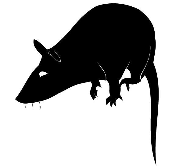 Vector Rat Silhouette Download Free Animals Vector Art Rat Silhouette Silhouette Vector Vector Free
