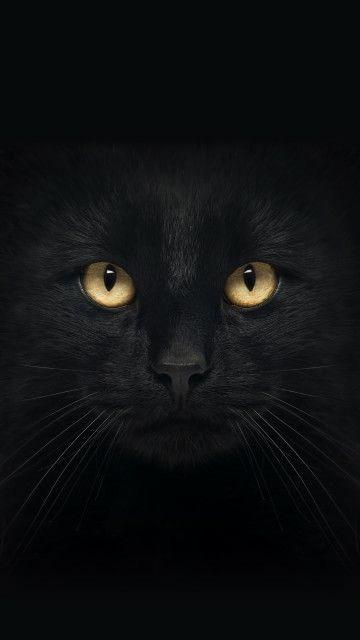 Pin De Morgane Em Furry Fluffballs Gatos Egipcios Gatinhos Fofos Papel De Parede Gatos