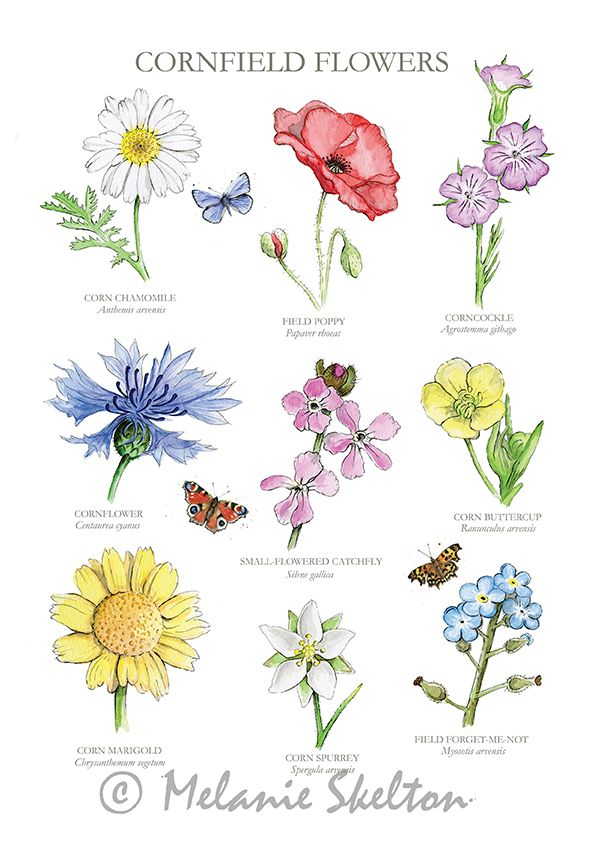 Small Flowers With Soft Coloration Persona 5 : small, flowers, coloration, persona, Watercolor, Ideas, Watercolor,, Paintings