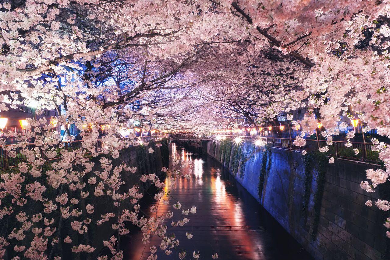 Meguro River Tokyo Japan Lit Wallpaper Amazing Nature Photography Beautiful Backgrounds