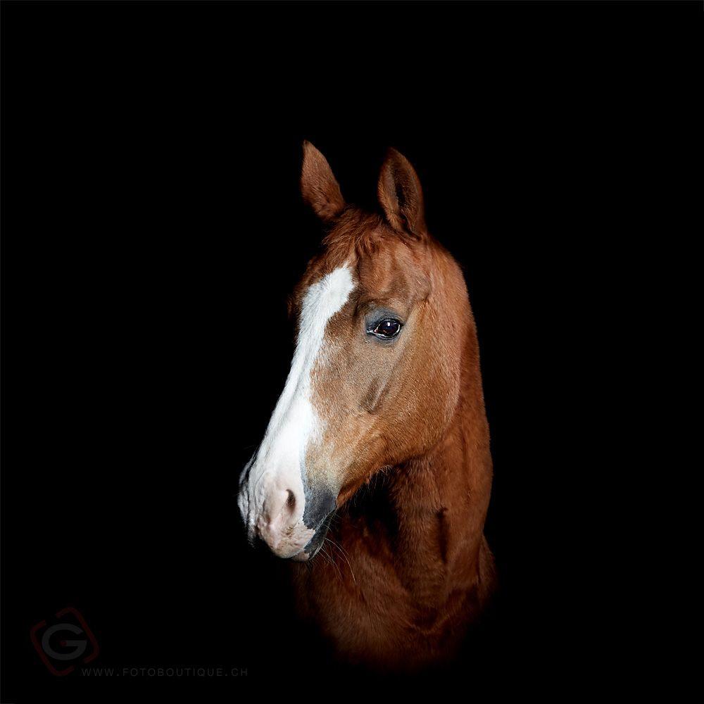 horse   (Tobias Gerber)