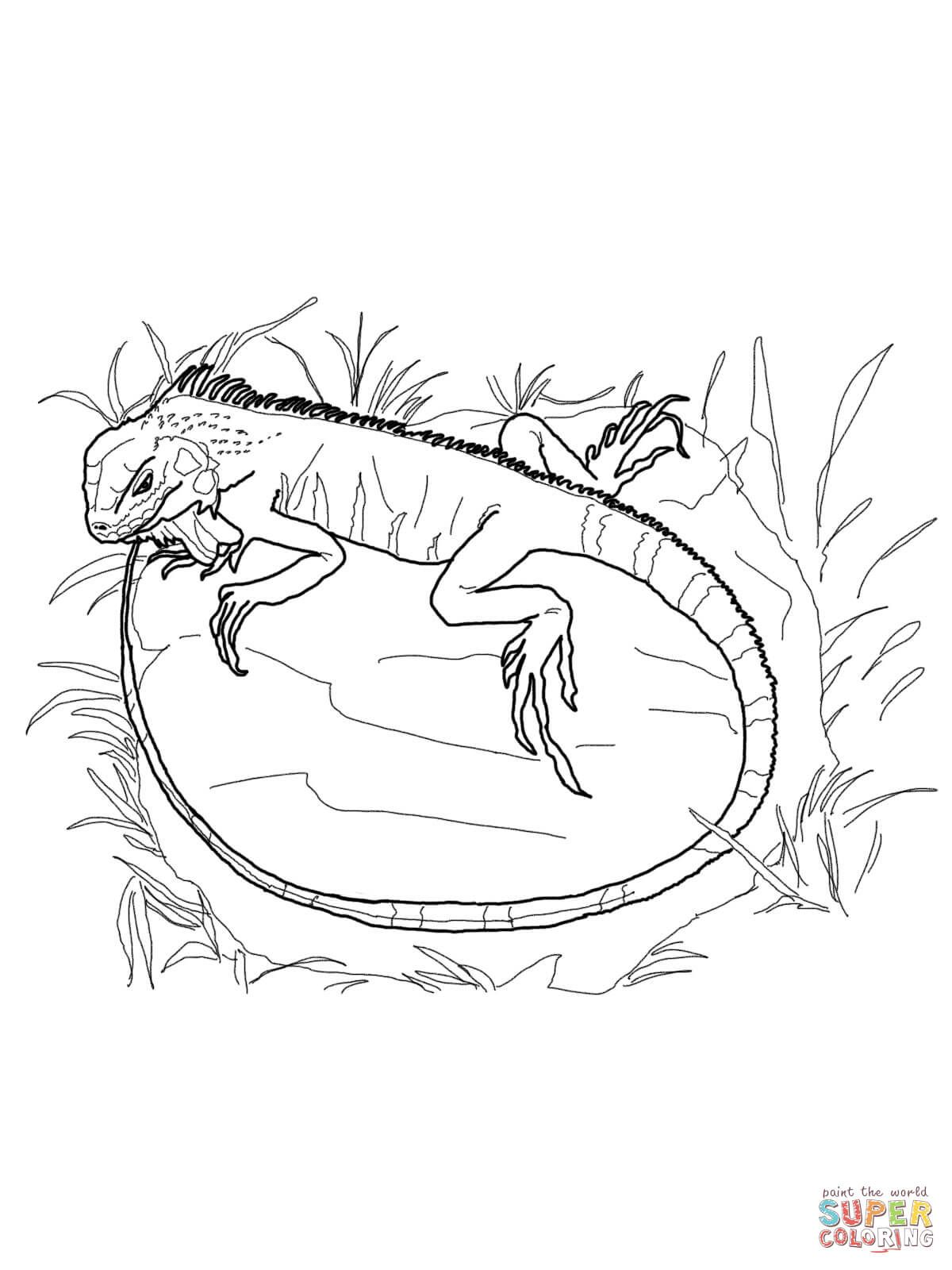 Green Iguana Coloring Page From Iguana Category Select From 26977