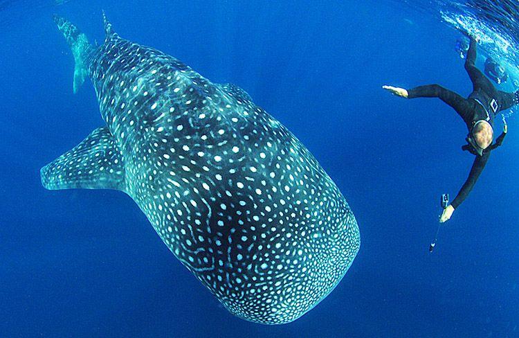 de308e2c2c4e7 Quintana Roo Dive Report