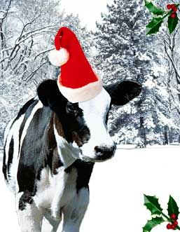 Christmas Cow.Christmas Cows Barns Christmas Animals Christmas Cats Cow