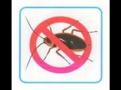 """Video tutorial paso a paso sobre como hacer un efectivo """"Mata-Cucarachas"""" diy.."""