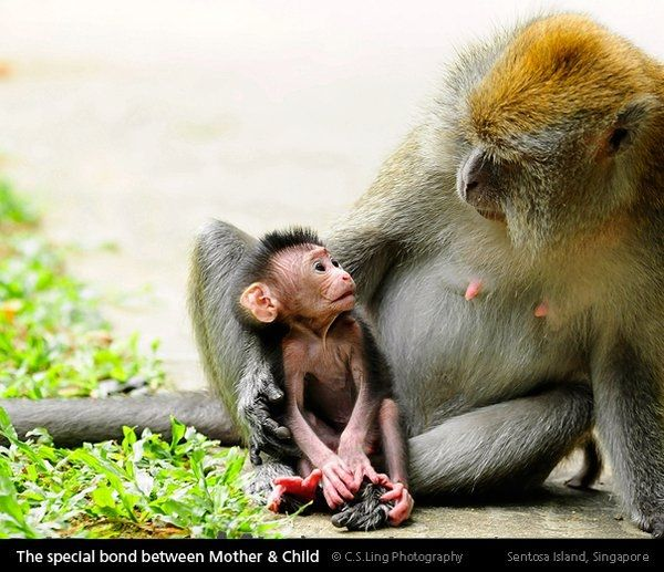 How many other animals make eye contact with their young? | Baby animals, Animals, Animals beautiful