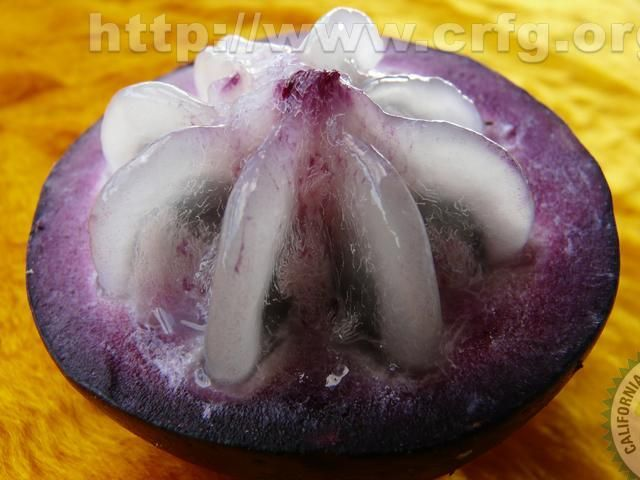 kaimito (Star Apple), Philippines this tropical fruit