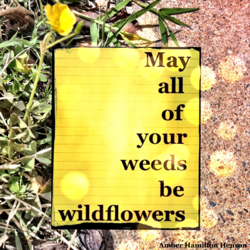 May All Of Your Weeds Be Wildflowers Wild Flower Quotes Inspirational Readings Inspirational Words