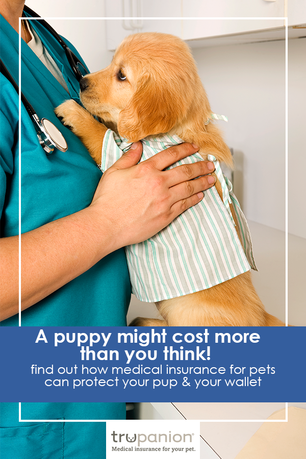 """ahhhhh i can't handle it lol. a puppy in a """"hospital gown"""