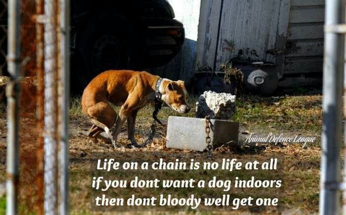 On A Chain Sayings Animals Pitbulls Stop Animal Cruelty