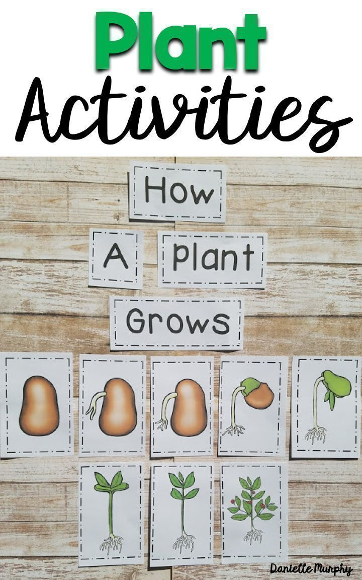 Plant Non Fiction Unit For Kindergarten First Second Grade Posters Anchor Charts Life Cycle Activit Plant Activities Plant Life Cycle Kindergarten Science [ 1152 x 720 Pixel ]