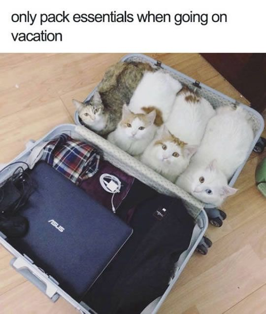 10 Fresh Animal Memes 1 Vacation Luggage Packing Tips