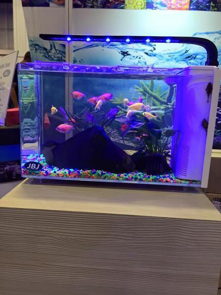 Jbj Rimless Desktop Aquarium Series Aquariumstoredepot Desktop Aquarium Aquarium Biotope Aquarium