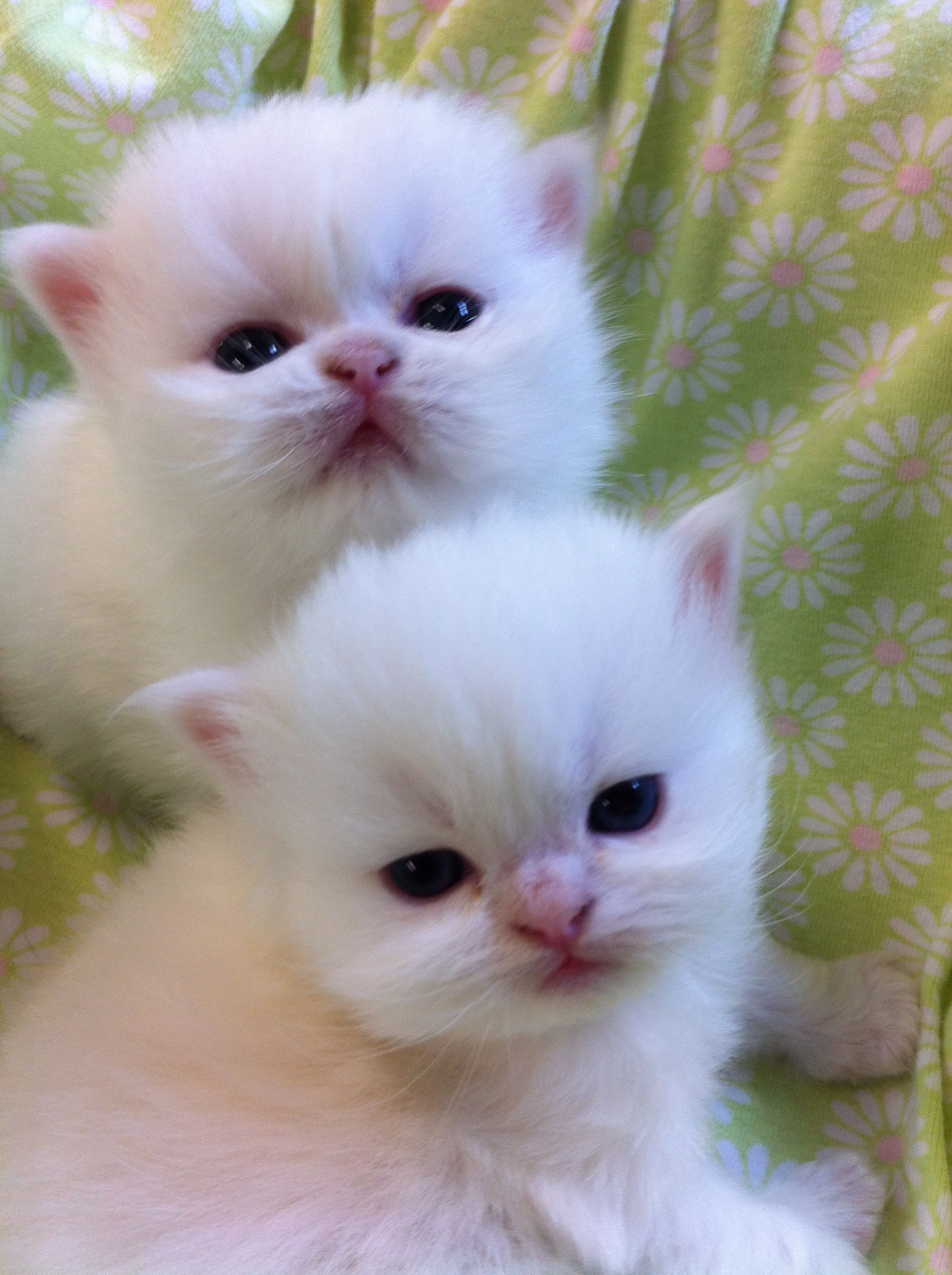 I Love You I Really Do Love From One Of Your Newest Pals On Pinterest The Jacqui 1 2 Of Jacquiand Cute Puppies And Kittens Cute Cats Kittens Cutest