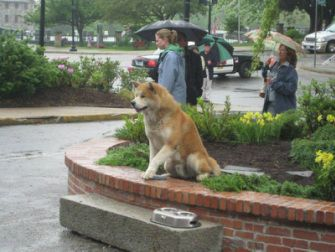 Hachiko A Dogs Story Music Video From Movie