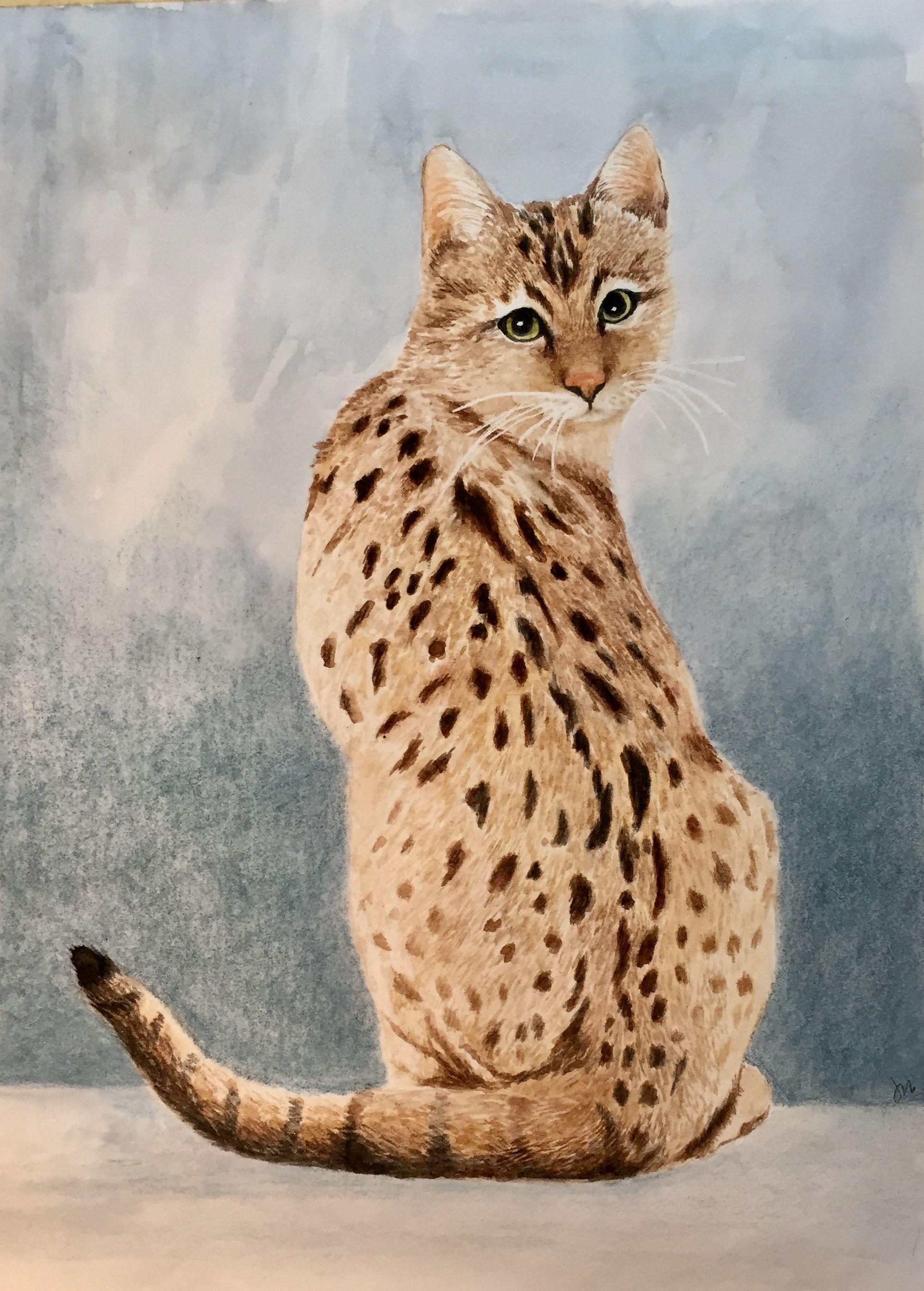 Bengal Cat Watercolor Jane Mcmaster Watercolor Cat Art Cat Art