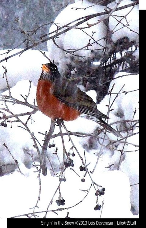 Rockin Robin Singin In The Snow Where Is Spring