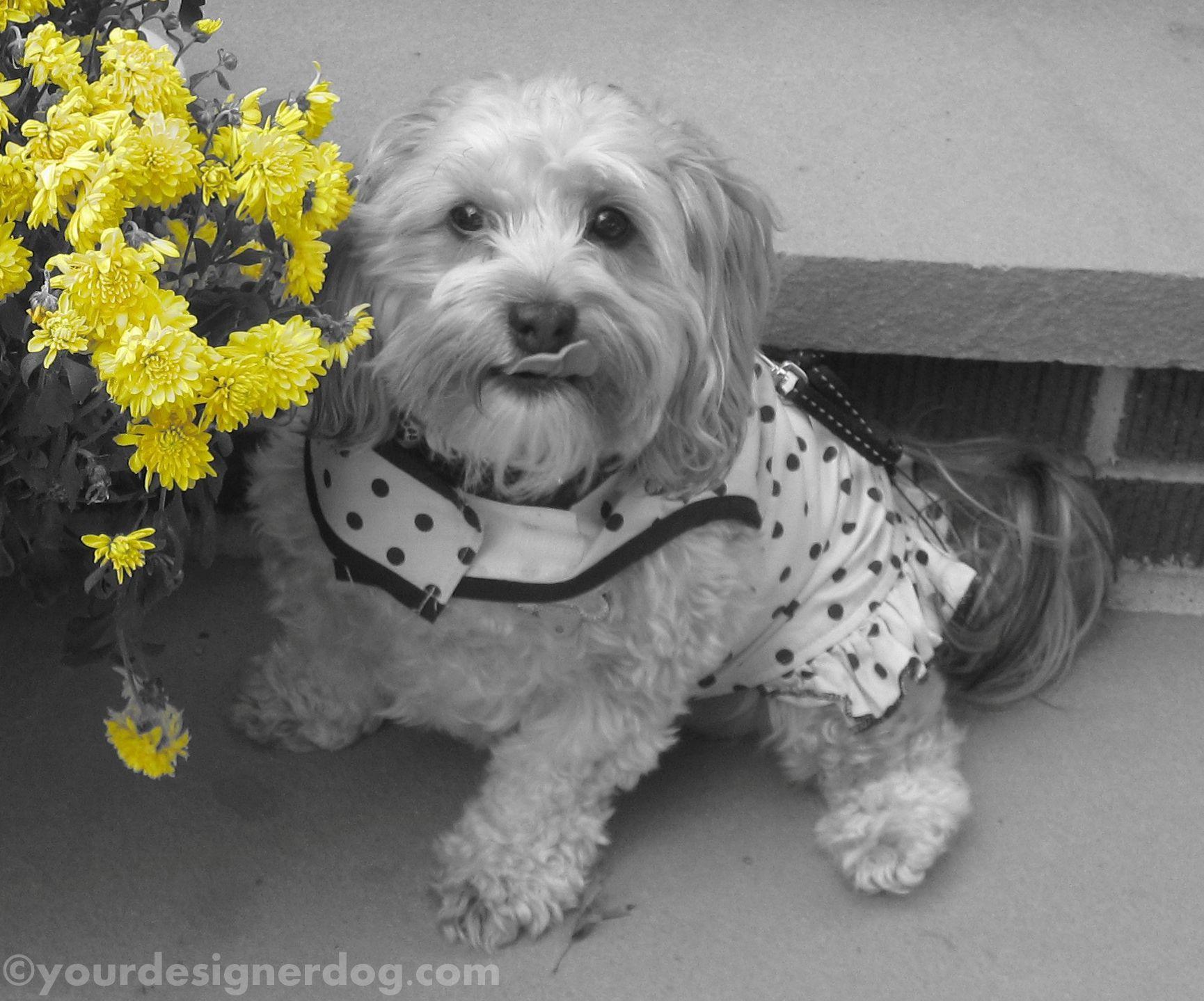 Yourdesignerdog blog features the adorable photos and amusing antics