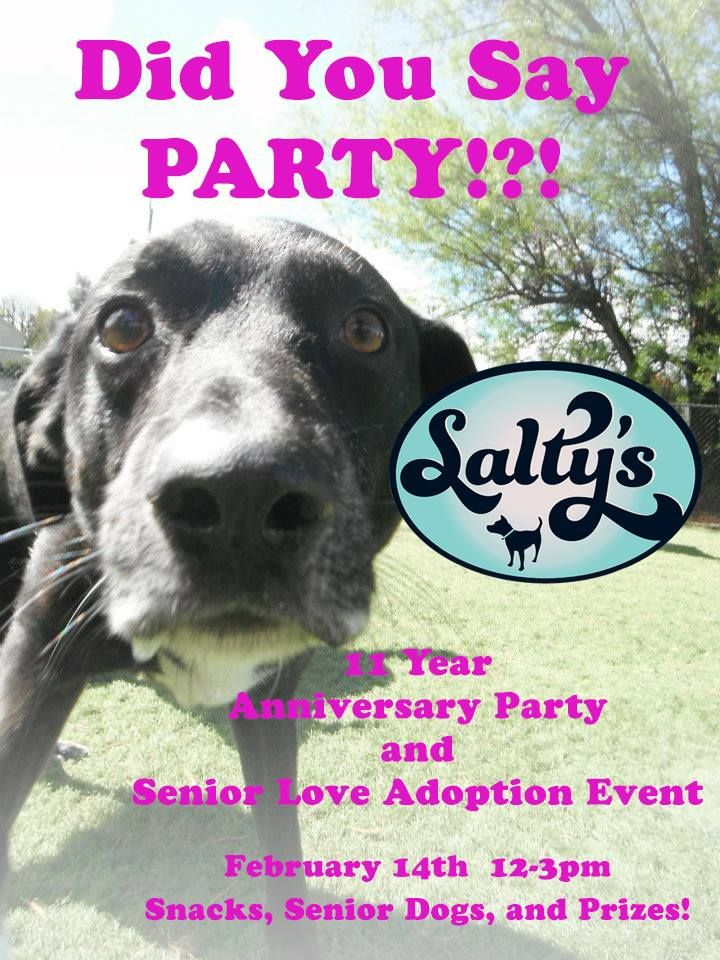 Celebrate Seniors And Salty S Pet Supply S Birthday With Images