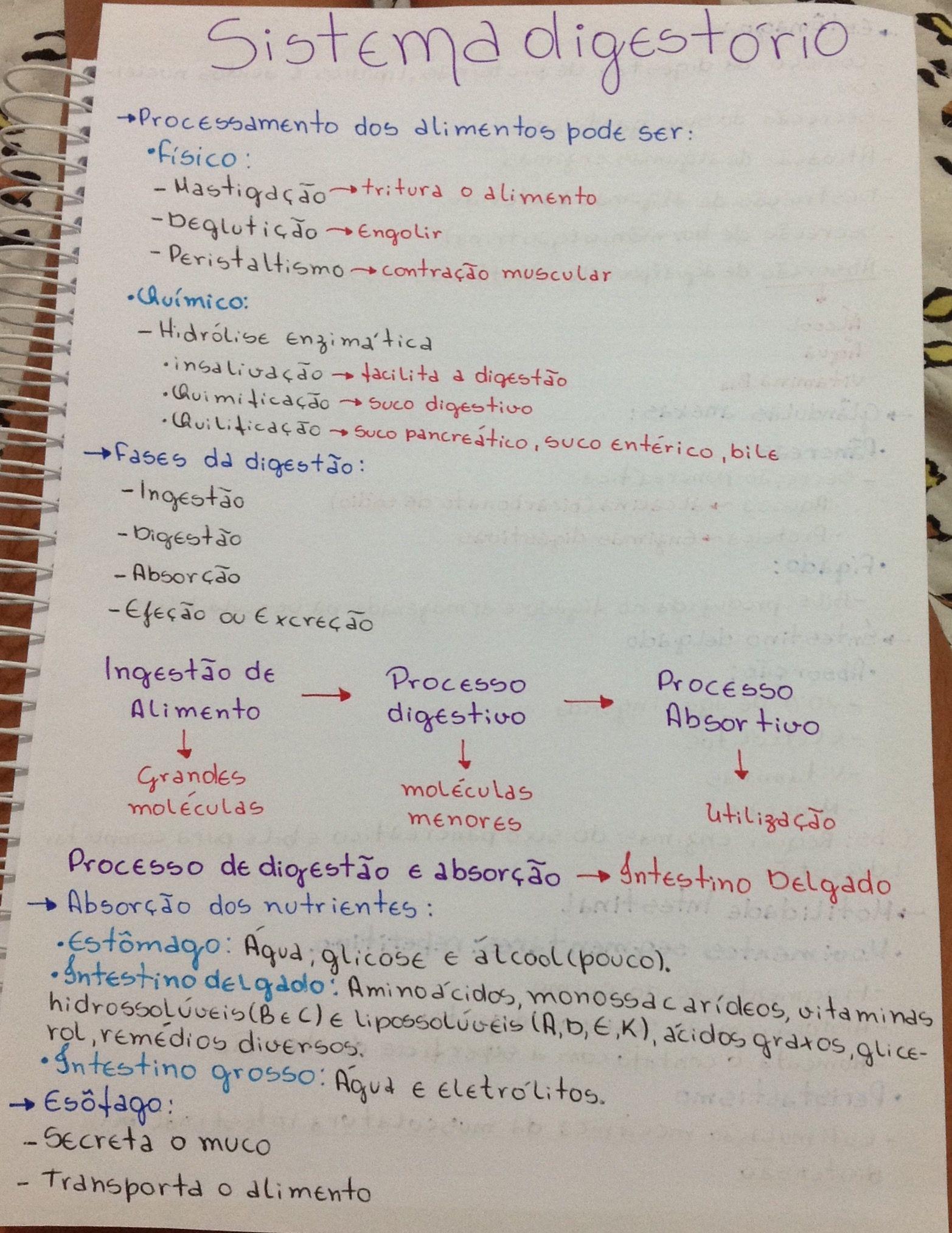 Sistema digestório | Biologia | Pinterest | Biología, Anatomía y ...