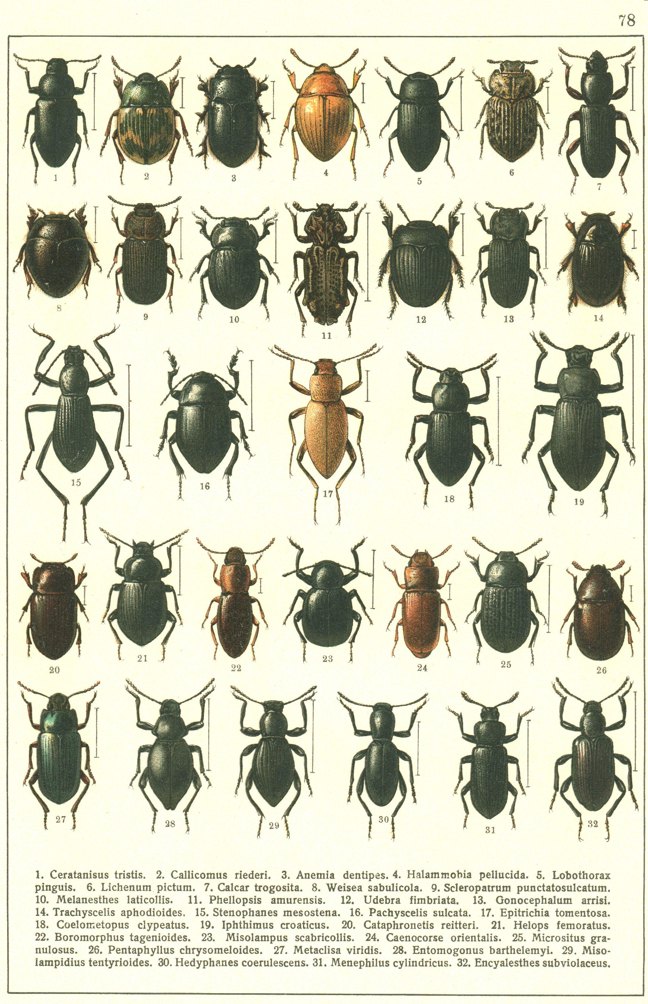 Epingle Par Mocca Sur Beetle
