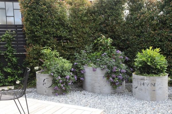 Concrete Drainage Pipes Make Excellent Planters For Citrus Trees,  Heliotropes And Herbs. Garden Pool