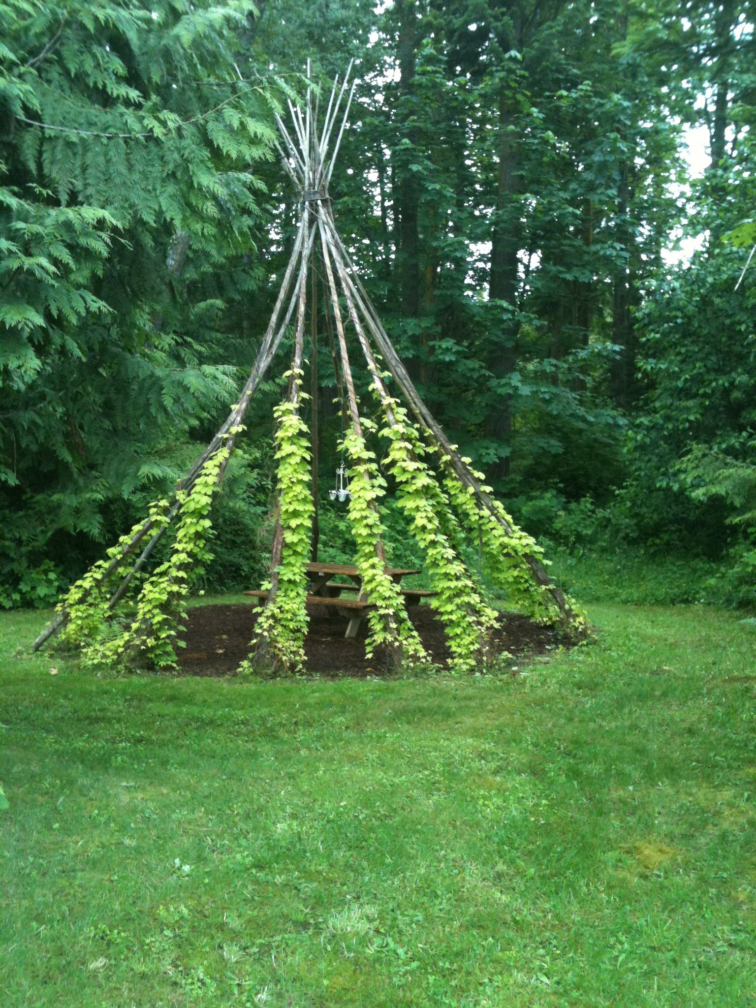 Natural Ivy Teepee Sweet Back Yard Design Amp Gardening