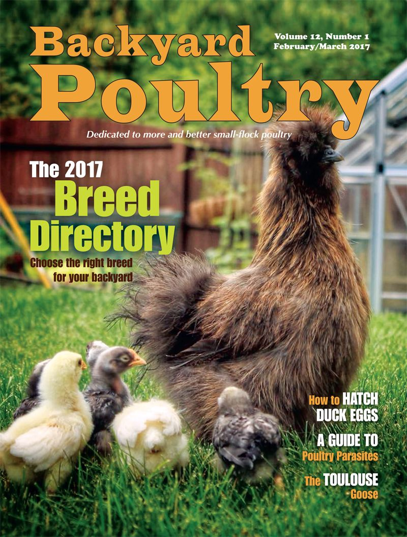 byp february march 2017 chickens pinterest backyard chickens