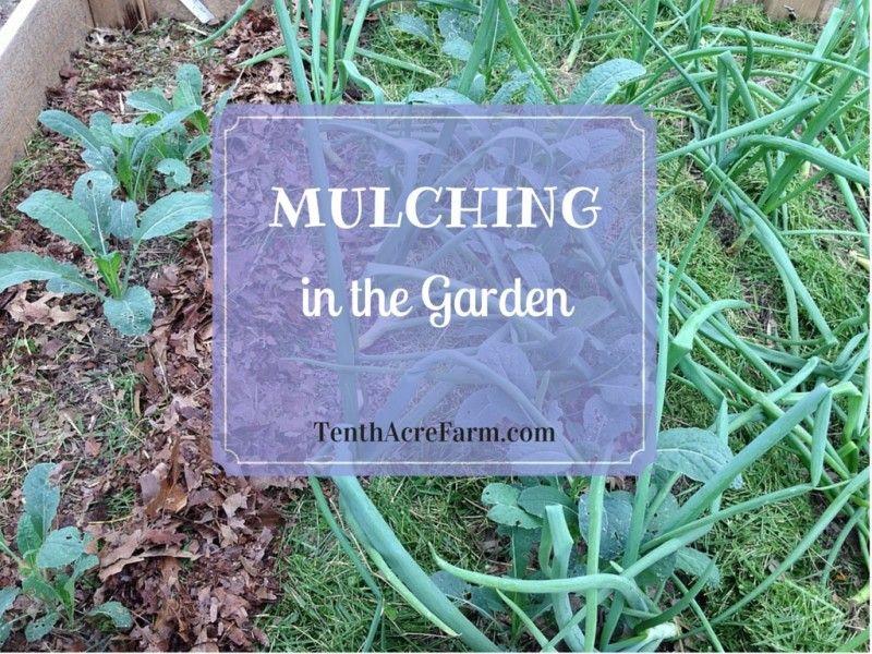 Deep Mulch Gardening , Mulching In The Permaculture Garden