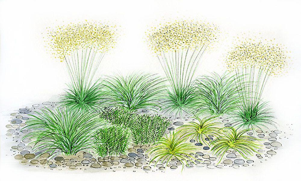 Das Graserbeet Fur Den Garten Konnt Ihr Im Mein Schoner Garten Shop Bestellen Graeserbeet Ziergras Meinschoenergarten Pflanzen Schatten Pflanzen Gras