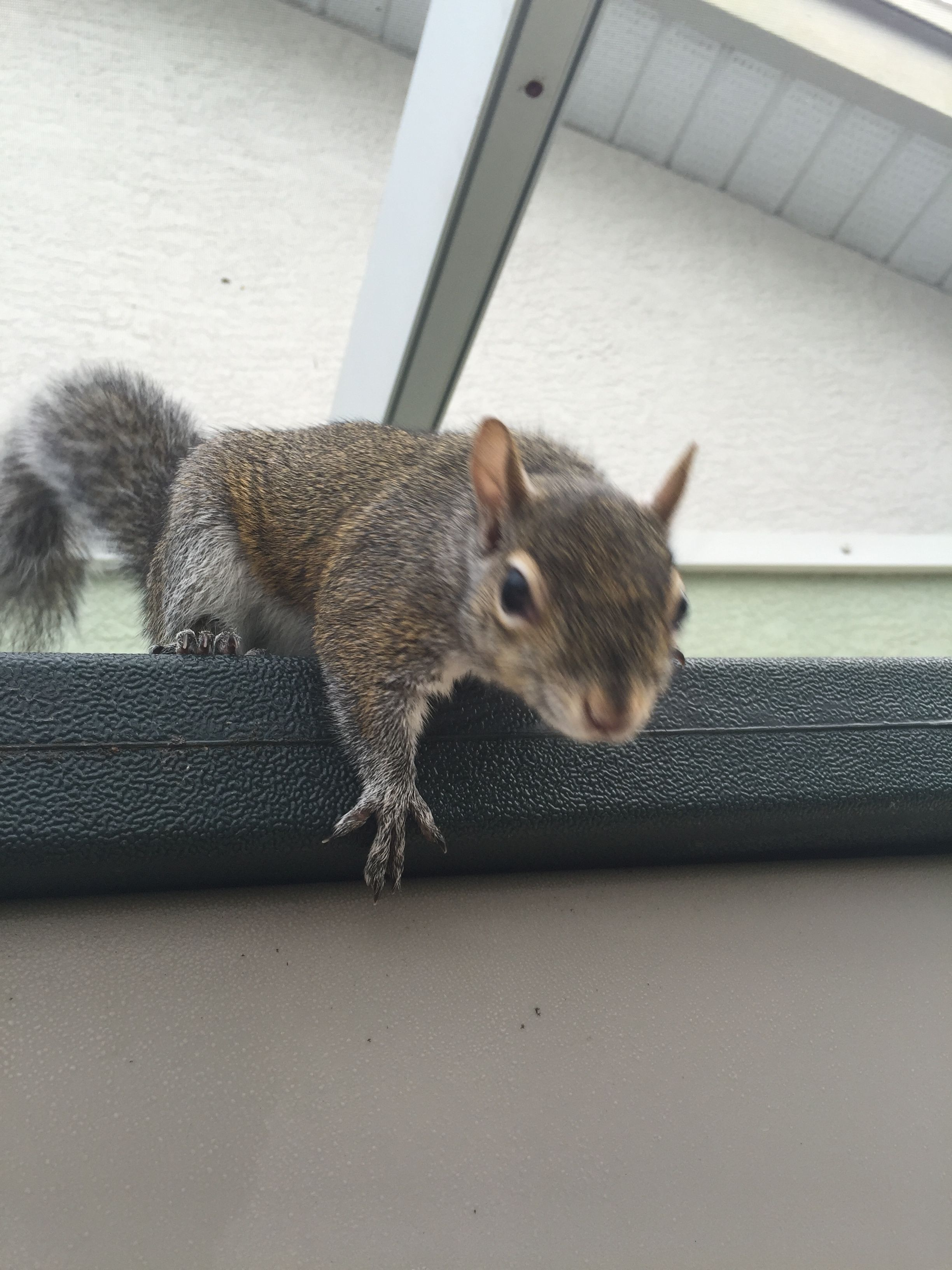 Hey i know you up squirrel squirrel lovely creatures