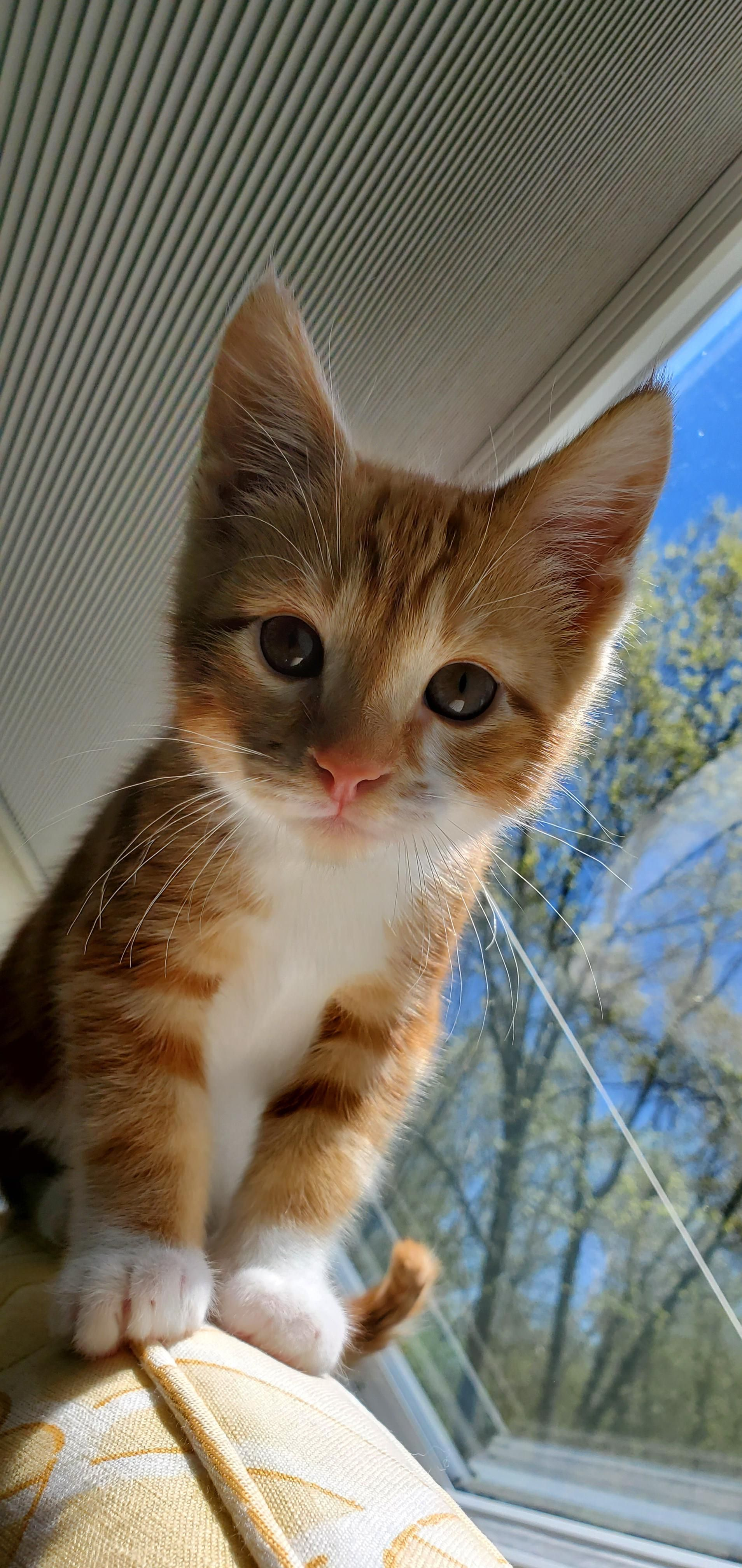 Real Estate Marketing Reviews My New Kitten His Name Is Goose In 2020 Cats Kitten Cat Post