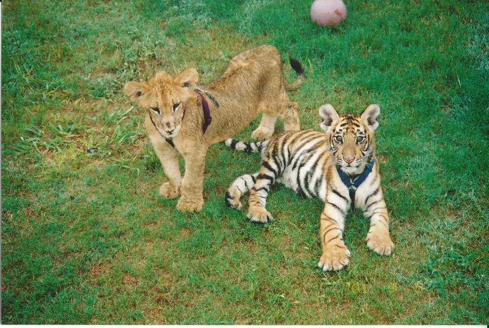 We do believe that Leo and Shere Khan were just the cutest ...