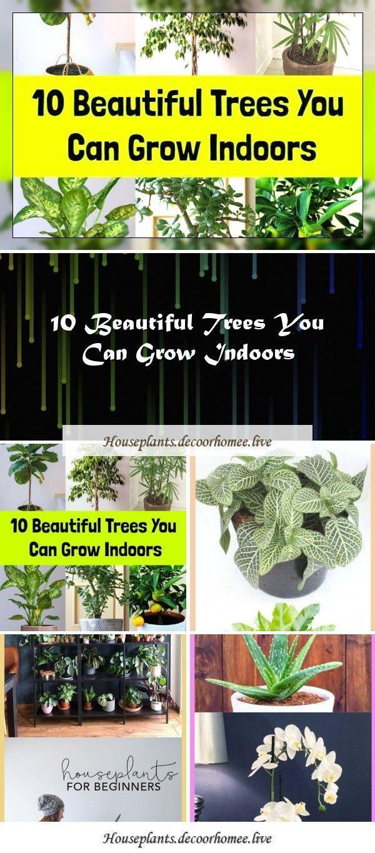Pflege Zimmerpflanzen Zimmerpflanzen Garten. Zimmerpflanzen bei schlechten Lichtverhältnissen ...#bei #gärten #lichtverhältnissen #pflege #schlechten #zimmerpflanzen