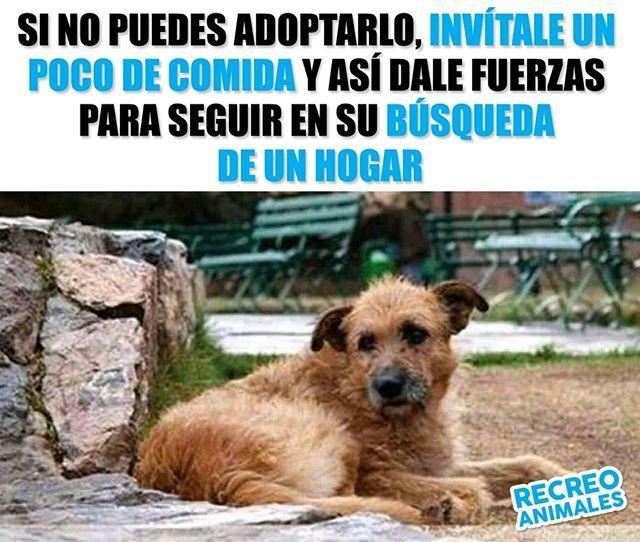 Todos Podemos Poner Nuestro Granito De Arena Para Que Los Animales Callejeros Sufran Menossi No Adoptas No Igno Animals Beautiful Animals And Pets Cute Animals