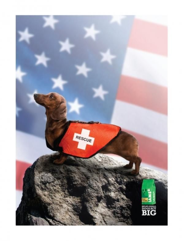 K9 Search And Rescue Dogs Even A Little Doxie Can Be Trained In