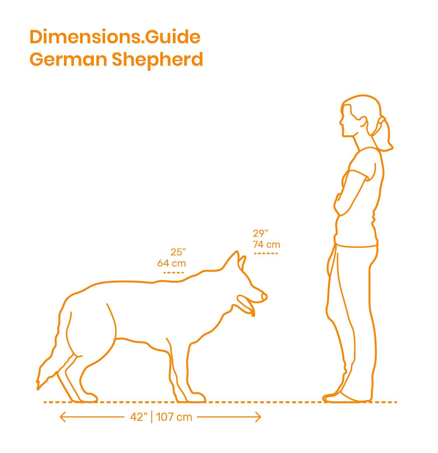 German Shepherd Size Comparison German Shepherd Working Dogs Shepherd
