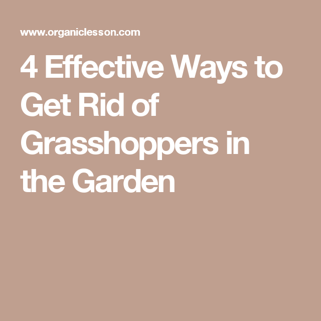 37072f354d6ea4939f3647f139677338 - How To Get Rid Of Grasshoppers On My Plants
